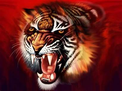 Tiger 3d Cool Wallpapers Desktop Animals Tigers