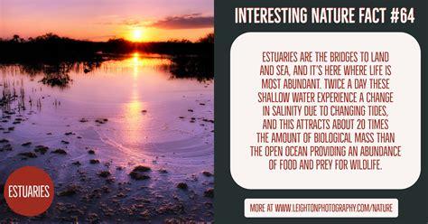 Interesting Nature Facts #64 - Estuaries