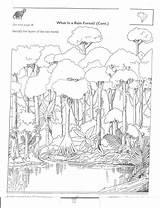 Rainforest Amazon Animals Worksheets Label Layer Activities K12 Sd Packet Geography Kindergarten Endangered sketch template