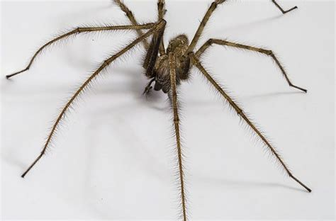 Spinnen Im Staubsauger Ueberleben Oder Sterben by Sterben Tiere Durch Den Staubsauger Staubsauger Im Test Net