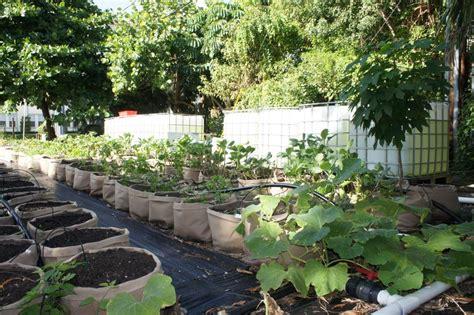 Vegetable Gardening In South