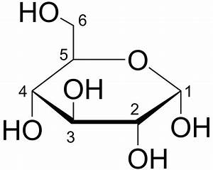 Photosynthesis: What happens to glucose after it is made ...  Glucose