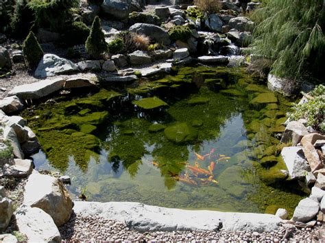 pictures of ponds koi pond