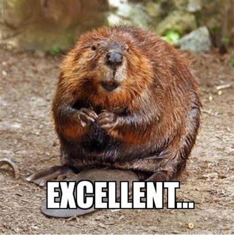Beaver Meme - mr burns er mr beaver reaction images know your meme