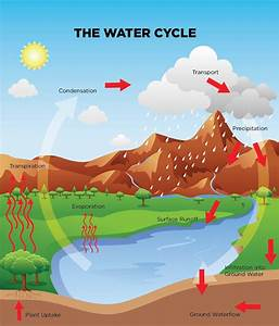 Runoff Water Cycle For Kids | www.pixshark.com - Images ...