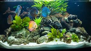 Aquarium Als Raumteiler : aquarium als raumteiler rabatte bis zu 70 i westwing ~ Michelbontemps.com Haus und Dekorationen
