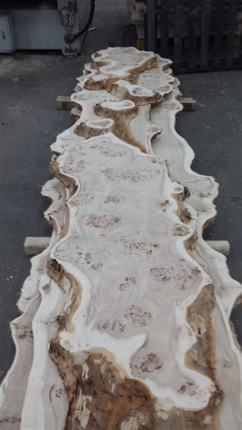 mappa burl kiln dried wood slabs