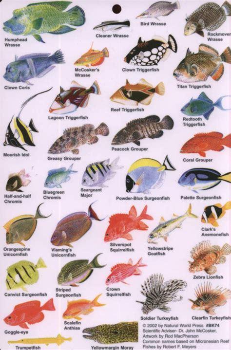 indian ocean fish guide  reef fish   indian ocean