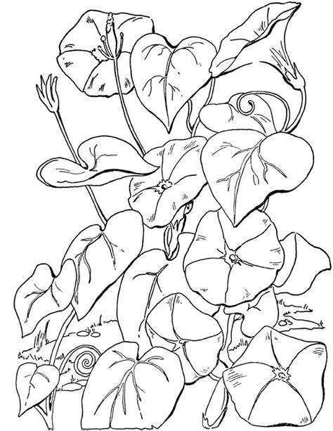 10 Floral Adult Coloring Pages Flower coloring pages