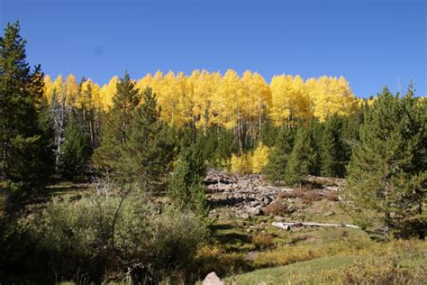 utah tree permits forest service the ultimate utah outdoor list