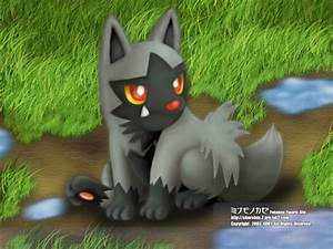 Pokémon images poochyena wallpaper and background photos ...