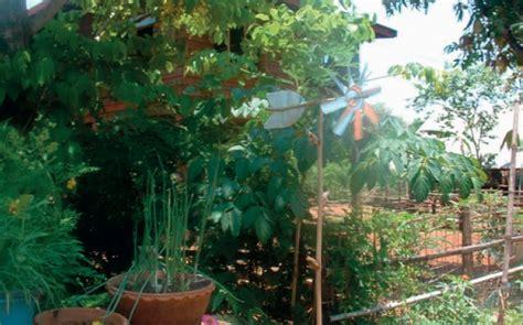 การปลูกพืชผักสวนครัว   ไร่ชญาทิพ