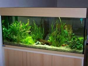 Aquarium Einrichten Anfänger : community mein aquarium ~ Lizthompson.info Haus und Dekorationen
