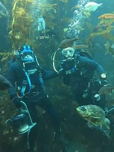 Scuba Diving In The Kelp Forest Exhibit