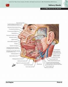 Orthopedic Anatomy Review