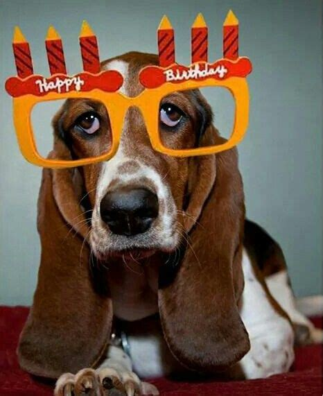 basset birthdays bassets love em