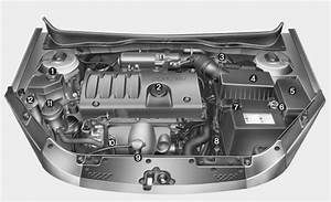 Engine Compartment - Your Vehicle At A Glance