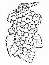 Grapes Coloring Pages Grape Printable Drawing Purple Leaf Preschool Template Fruit Fruits Colouring Clipart Da Ausmalen Ausmalbilder Designs Bilder Sheets sketch template