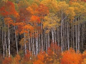 Free Fall Autumn Desktop Wallpaper Widescreen