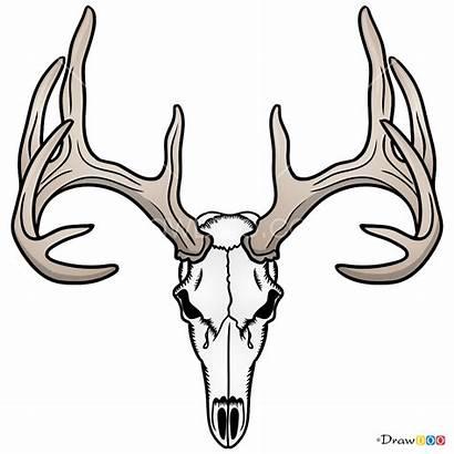 Deer Skull Draw Skeletons Deers