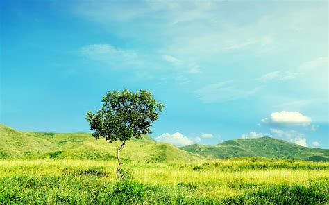 Little Tree Grass Hills Sky Wallpapers  Little Tree Grass