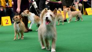 westminster kennel club dog show 2014 With show me dog kennels