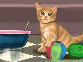 how to a cat to use a litter box how to retrain a cat to use the litter box