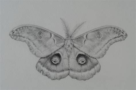 melissa basham studio drawings