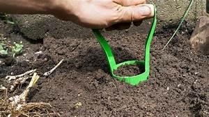 Blumenzwiebeln Richtig Setzen : blumenzwiebeln pflanzen ausgraben vermehren und ~ Lizthompson.info Haus und Dekorationen