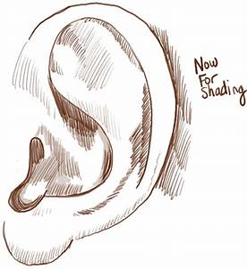 How to Draw Ears Side View with Easy Steps Lesson - How to ...