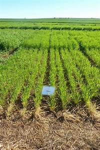 Increasing the value and marketability of feed grains for ...