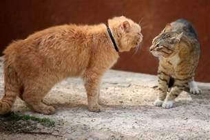 why do cats spray do cats spray why do cats spray