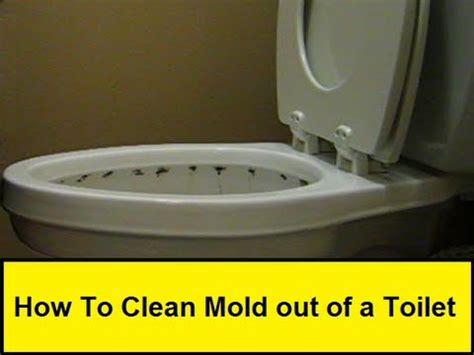 How To Clean Mold And How To Clean How To Clean Mold Out Of A Toilet Howtolou