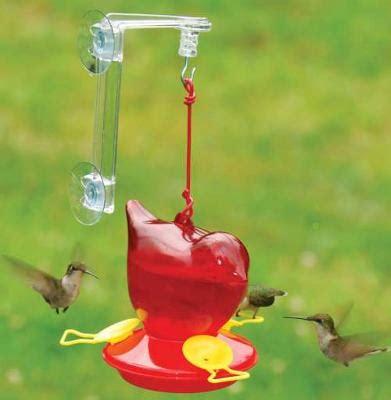 birds that feed at hummingbird feeders bird watching