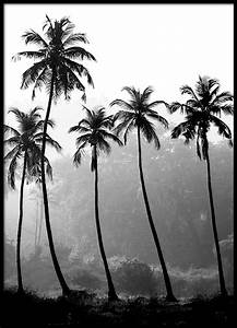 Magnettafel 50 X 70 : posters affiche avec photographie de palmier noir et blanc 50 x 70 cm ~ Bigdaddyawards.com Haus und Dekorationen