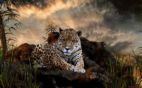 Category Wild Animals  Download Hd Wallpaper  Page 2