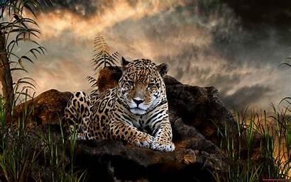 Tiger Wild Wallpapers Advertisement