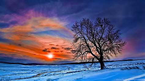 Beautiful Winter Forest Wallpapers Widescreen For Desktop ...