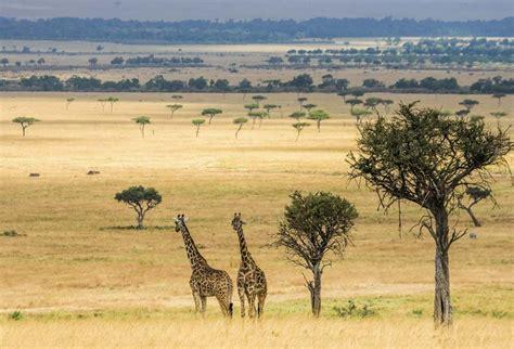 deco chambre savane tableau girafe toile imprimée animaux de la savane