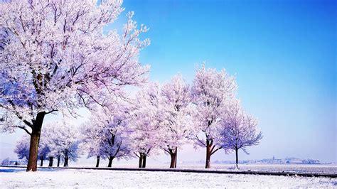 Cherry Blossom Wallpaper Anime 冬天雪景浪漫风景图片