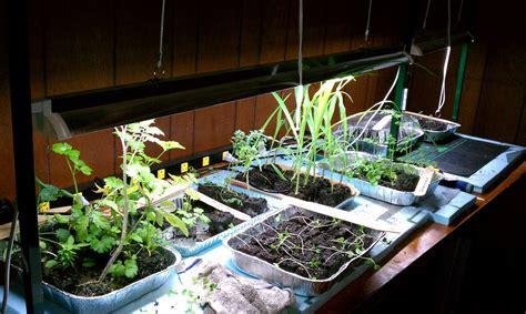 to lighting your indoor gardening system gardenerd