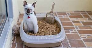 Litiere Chat Sans Odeur : liti re du chat comment limiter les mauvaises odeurs ~ Melissatoandfro.com Idées de Décoration