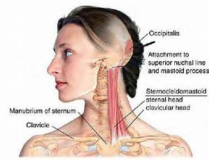 43 Best Images About Anatomy  U0026 Physiology On Pinterest