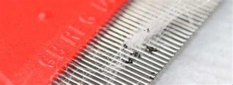 Kann Gegen Flöhe Machen by Find Counteract And Prevent Fleas
