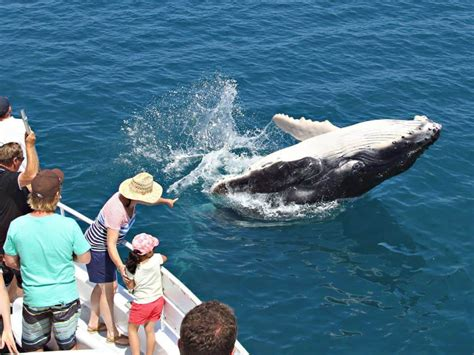 Experience Australia's Best Whale Watching Tours From