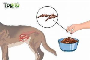 Home Remedies for Tapeworms in Dogs | Top 10 Home Remedies