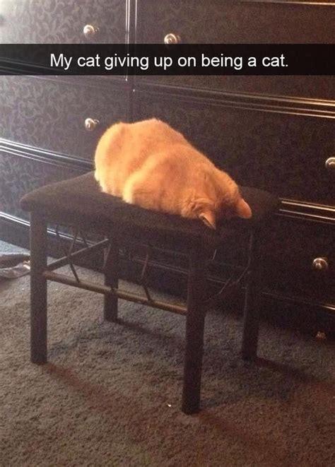 heres  funny cat snapchats guaranteed    laugh