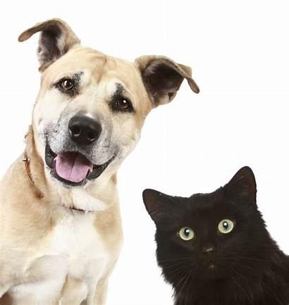 Pets Pet Estate Trusts Equine Wills Should