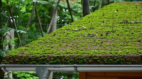 The Best Way To Remove Moss From Roof 1 3 4 Stainless Steel Roofing Nails Shed Roof Storage Building Plans Mobile Home Coating Lowes Simple For Deck American Supply Colorado Springs Metal Calculator Hip How To Build A Rooftop Kemper System Uk