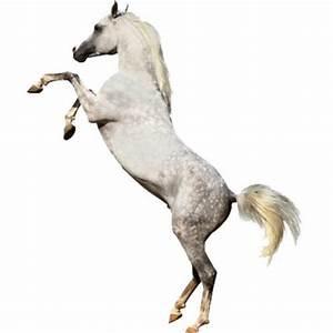 stickers cheval blanc cabré: adhésif décoratif, sticker, autocollant pour une décoration tendance
